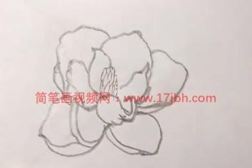 广玉兰简笔画图片大全