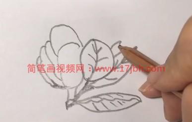 广玉兰简笔画