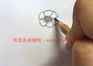 万寿菊简笔画