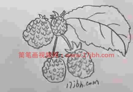 树莓简笔画