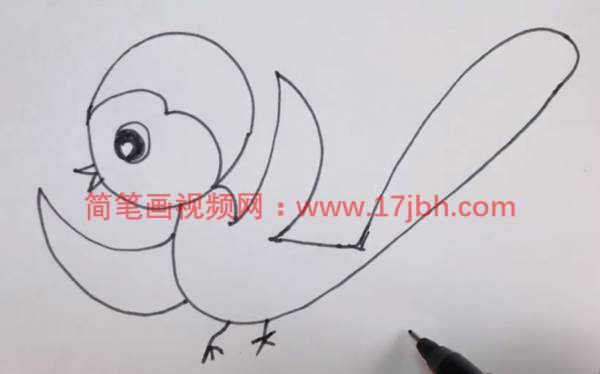 美丽的鸟图片简笔画