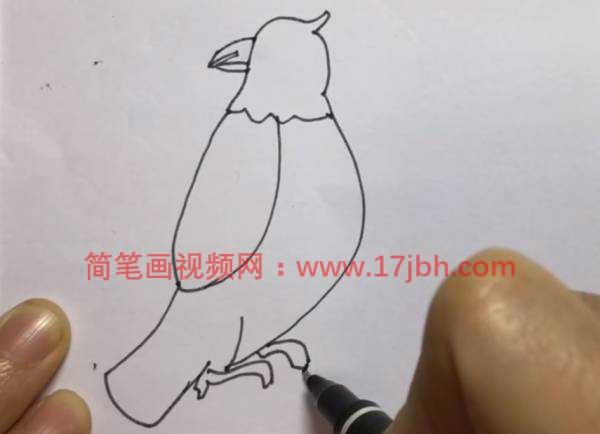 小鸟图片简笔画彩图