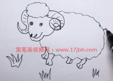 小绵羊的简笔画