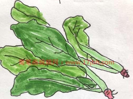 菠菜简笔画