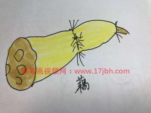 莲藕简笔画带颜色