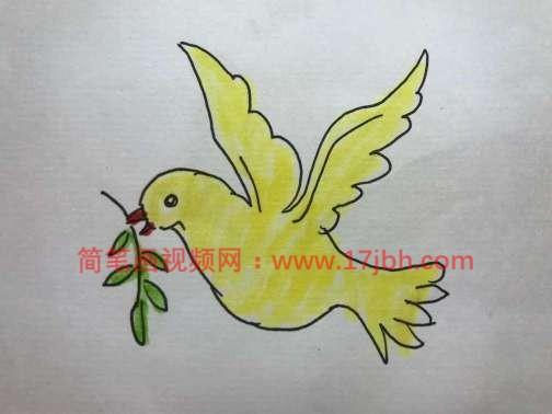 和平鸽简笔画图片