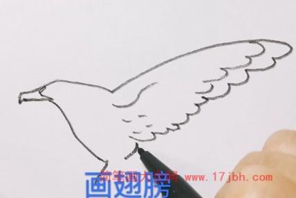 老鹰的简笔画步骤
