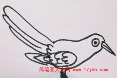 杜鹃鸟简笔画涂色