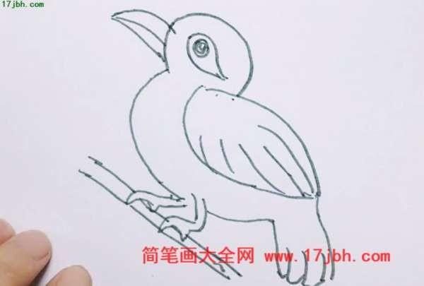 画眉鸟简笔画图片大全