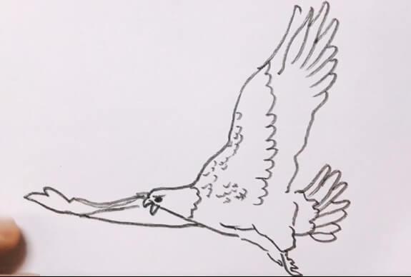 飞翔的老鹰简笔画