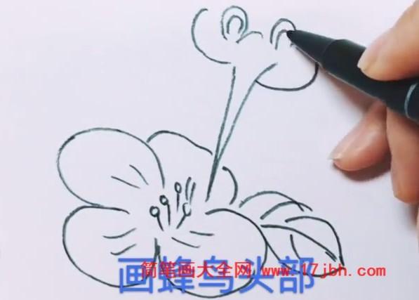 蜂鸟简笔画带颜色