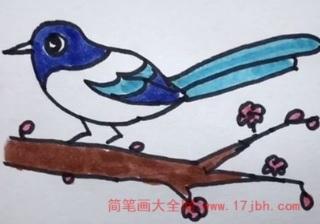 小鸟简笔画彩色大全