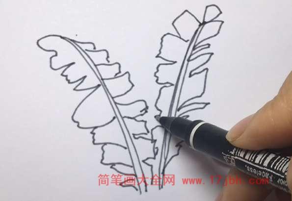 芭蕉树简笔画