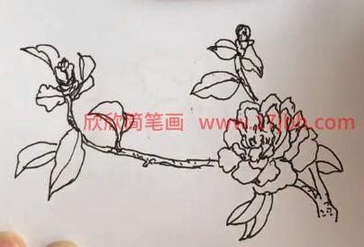 茶花怎么画简单好看
