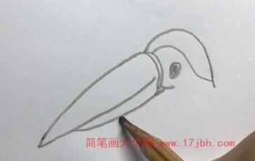巨嘴鸟简笔画图片大全