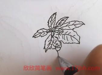 凤仙花简笔画图片大全