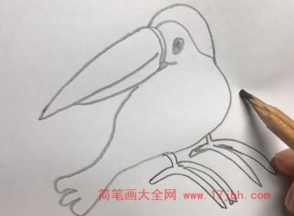 巨嘴鸟简笔画