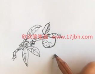 桔子简笔画