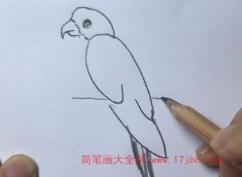 鹦鹉简笔画