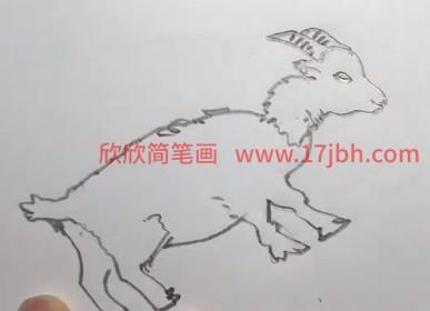 小山羊简笔画图片颜色