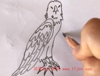 鹰雕简笔画