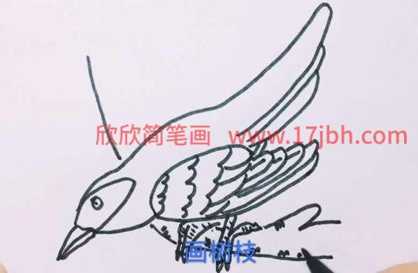 杜鹃鸟简笔画图片大全