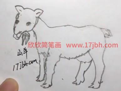 画山羊的简笔画