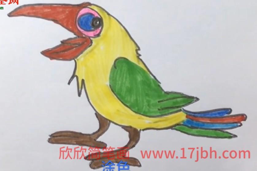 儿童画犀鸟简笔画视频