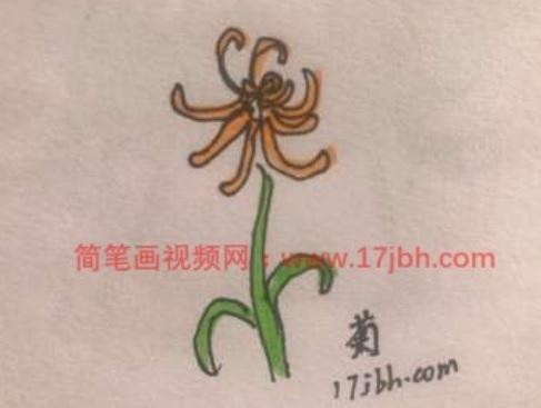 花朵简笔画图片大全