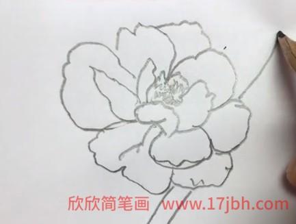 牡丹花简笔画图片大全