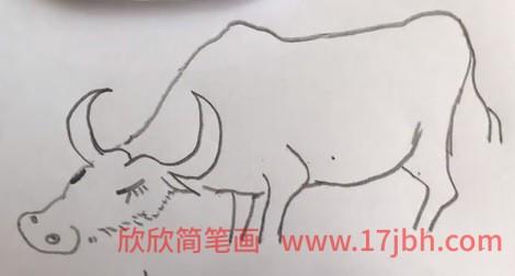 水牛简笔画