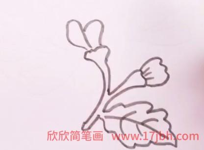 菊花简笔画图片