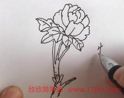 牡丹花简笔画