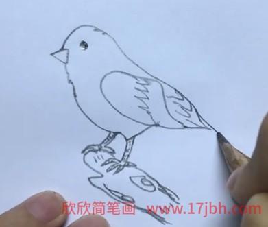 麻雀简笔画