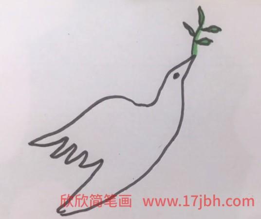 鸽子简笔画图片