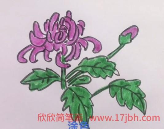 菊花简笔画