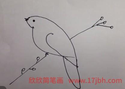 相思鸟简笔画