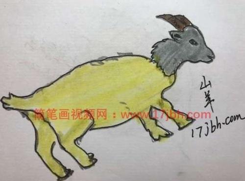 画羊的简笔画图片大全