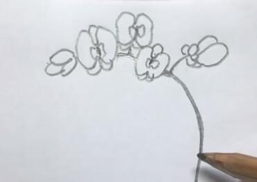 蝴蝶兰简笔画