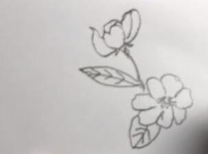 海棠花简笔画图片大全