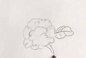 花菜图片简笔画