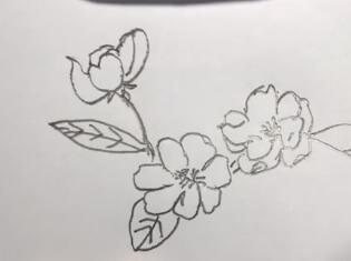 海棠花简笔画