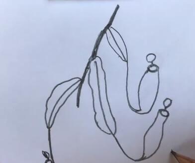 猪笼草简笔画图片