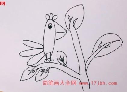 鹦鹉波利简笔画
