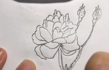蔷薇花简笔画