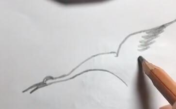 丹顶鹤简笔画的颜色