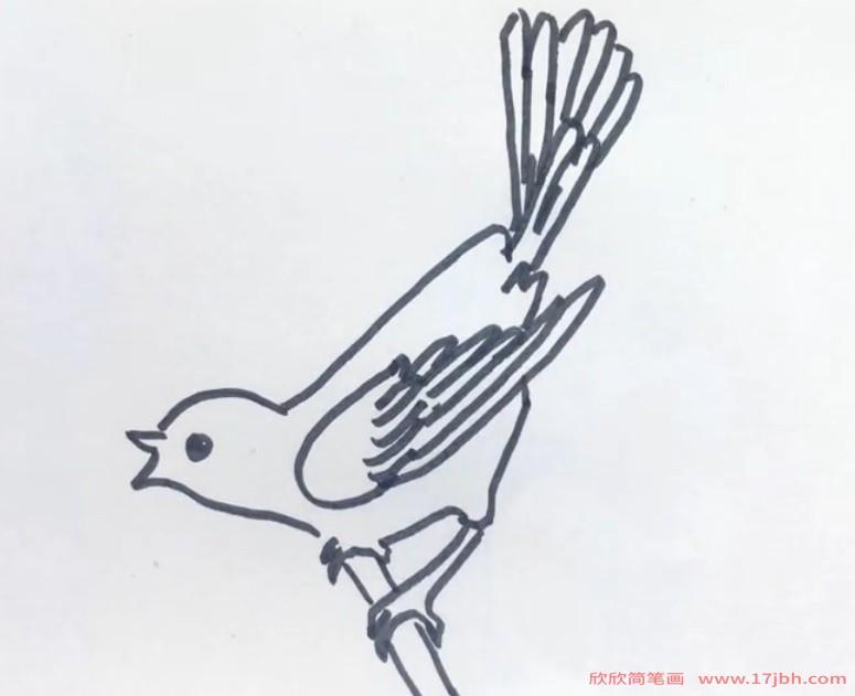 儿童杜鹃鸟简笔画
