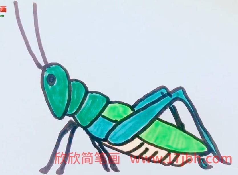 蚂蚱简笔画图片