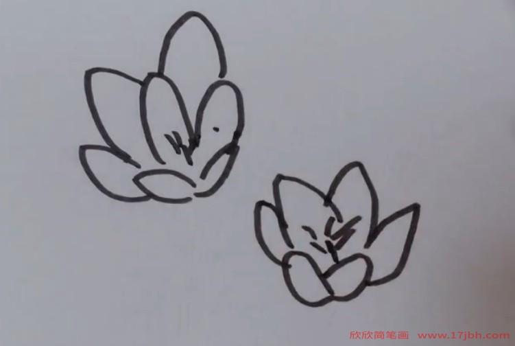 秋天的花图片简笔画