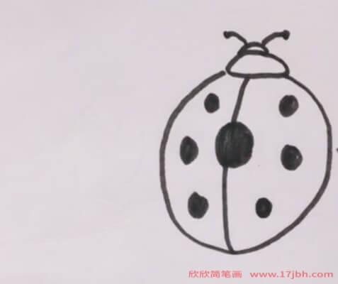 七星瓢虫简笔画图片